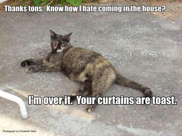 PatioCat Curtains are Toast