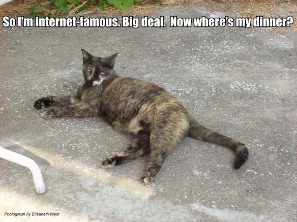 PatioCat INternet famous