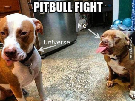 Pittbull fight universe and me