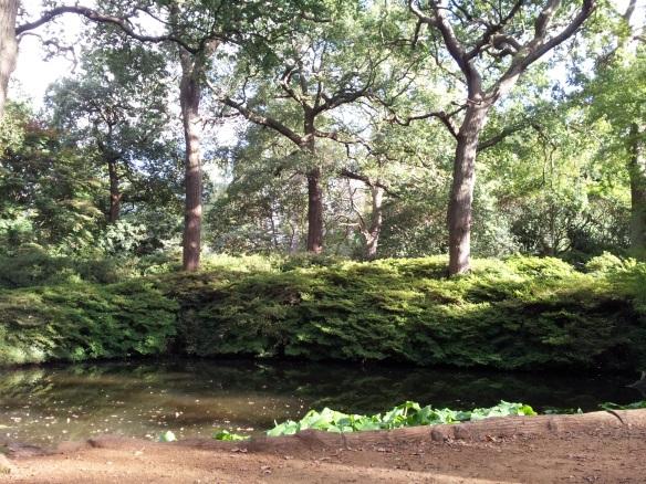 Pond in sun Isabella Plantation