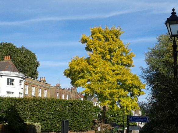 Pretty tree--Hammersmith, London