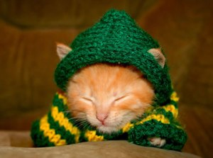 cute-kitten-knitted-sweater