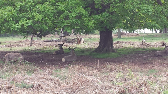 But first, some baby stags having bro time under a tree.