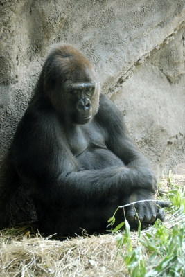 Your lack of faith disturbs me. -- Darth Gorilla