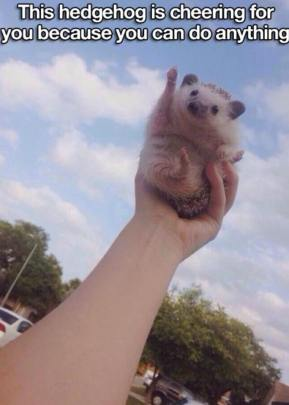 Hedgehog cheering for you