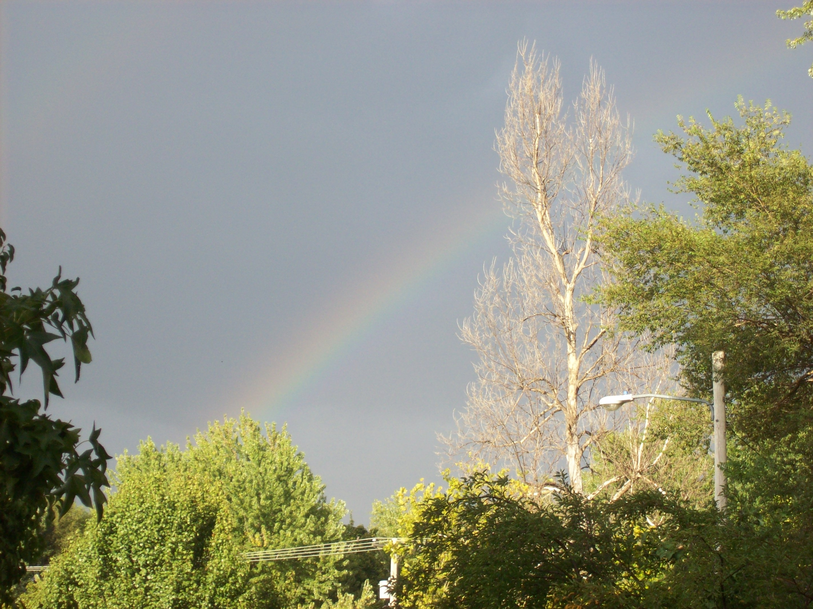 The white tree and the rainbow have decreed that it will happen--or maybe I'll just get wet.